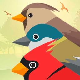 PRO Birds Complaints