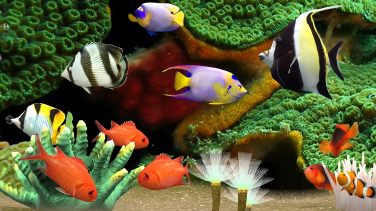 MyReef 3D Aquarium 3 screenshot-2