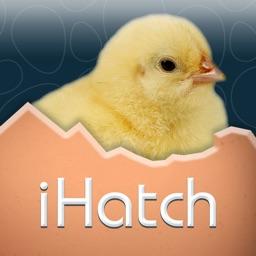 iHatch-Chickens