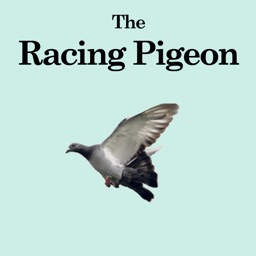 The Racing Pigeon