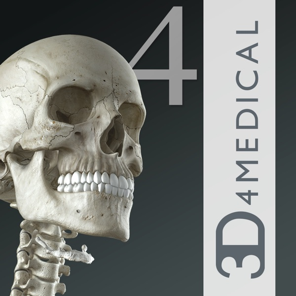 Essential skeleton 4 on the app store fandeluxe Image collections