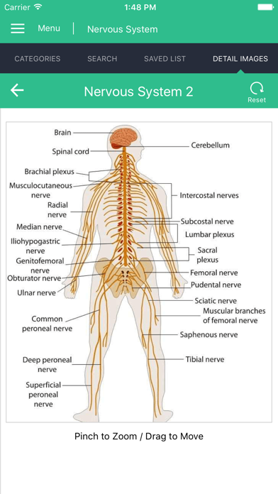 Nervous System Reference Guide screenshot two