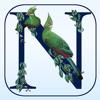 Satpack Travel - Newman's Birds of Africa artwork