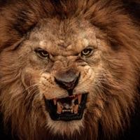 Codes for Lion City Simulator 3D Hack
