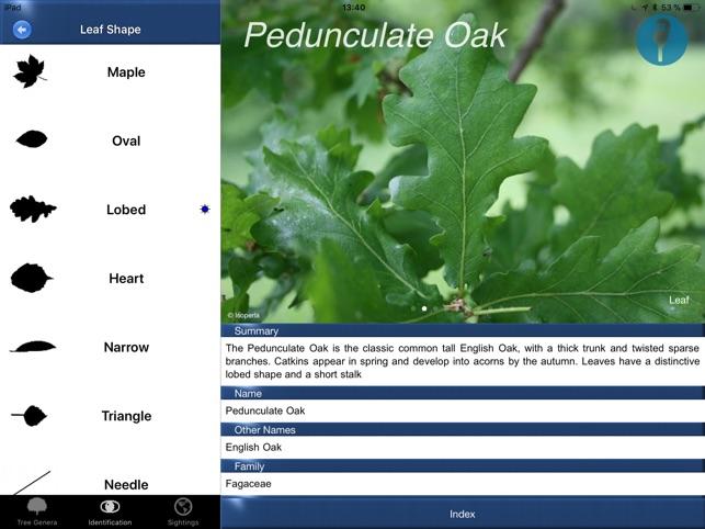 Tree Id identify UK trees on the App Store