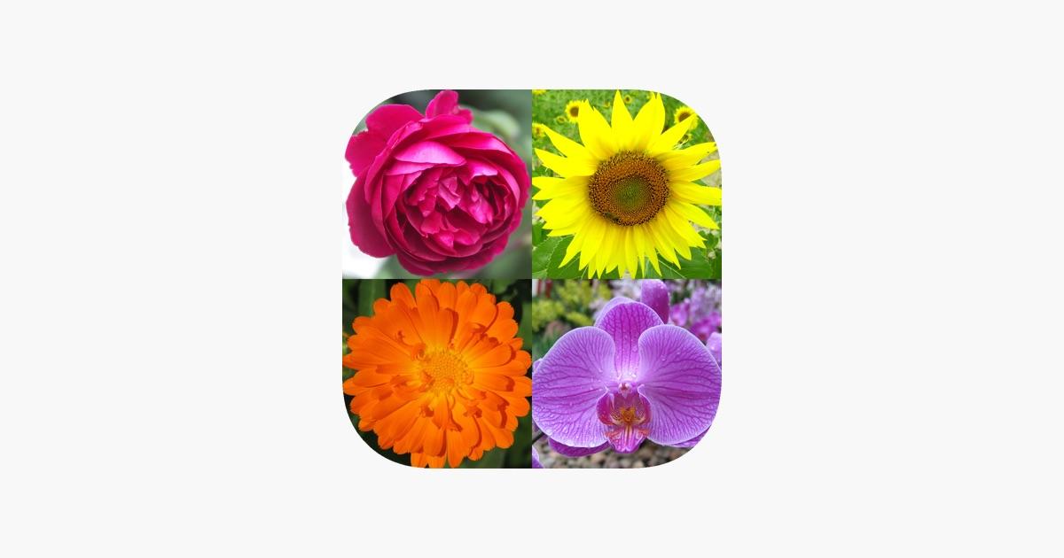 Flowers Quiz Beautiful Plants on the