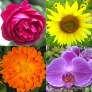 Flowers Quiz: Beautiful Plants