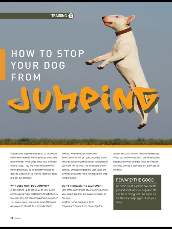 Good Dog (Magazine) screenshot 7
