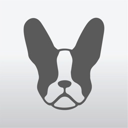 iFrenchie
