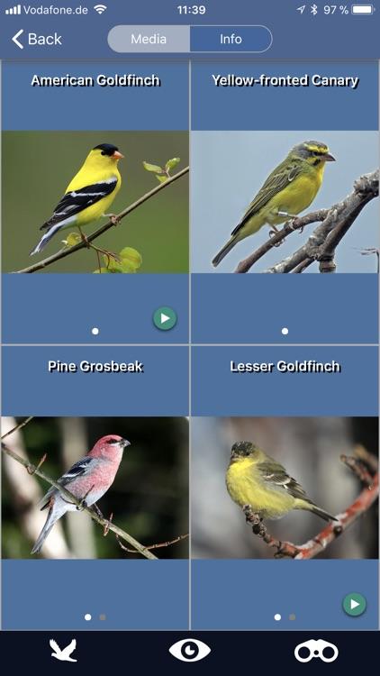 Bird Id USA backyard birds screenshot-3