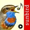 Fågelsång Id  - automatisk identifiering av fåglar