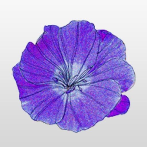 Purple Flower Sticker Pack