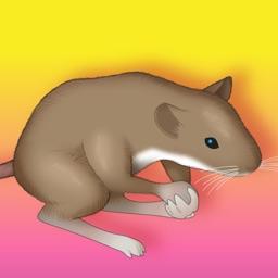Of Mice