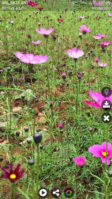 Piexplorer For Picasa Pro review screenshots