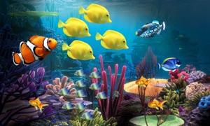 Aquarium Life HD
