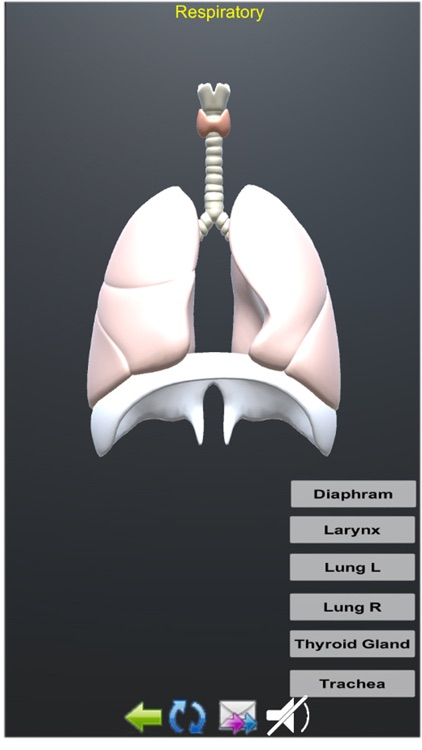 Human Anatomy Encyclopedia 3D screenshot-6