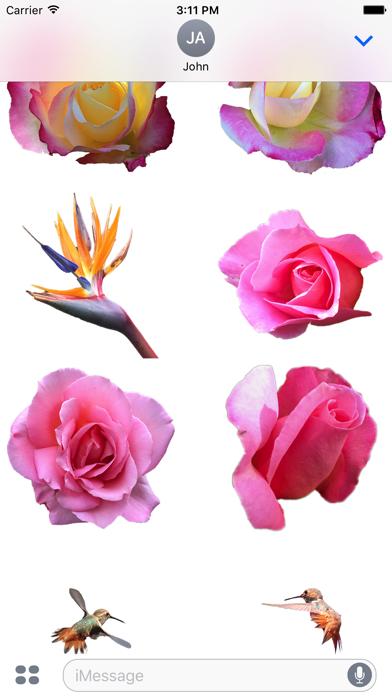 Hummingbird FlowersScreenshot of 3