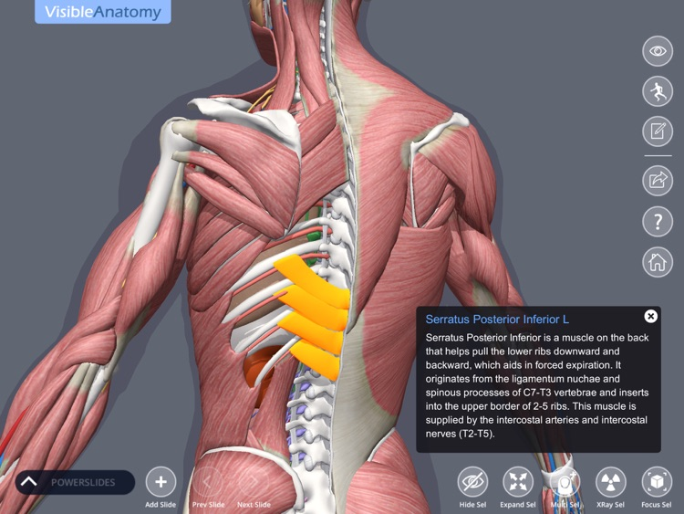 Visible Anatomy screenshot-0