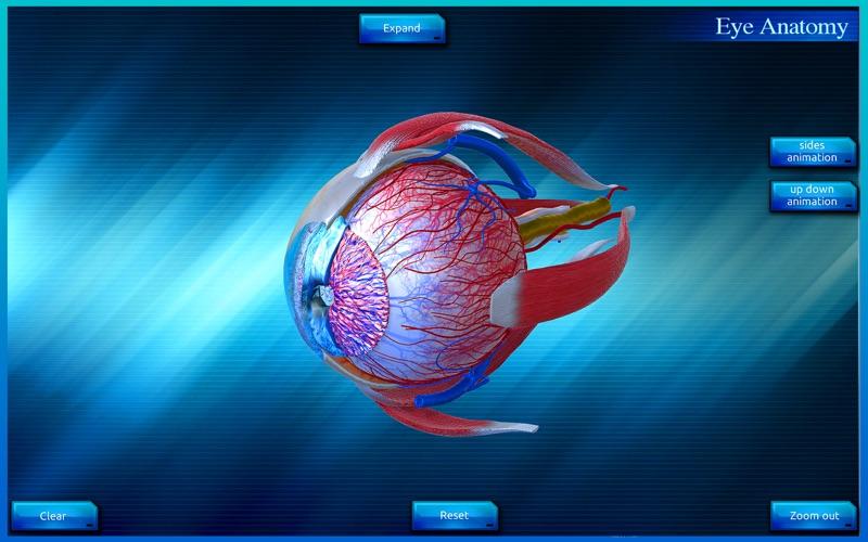 Eye Anatomy 3D скриншот программы 2
