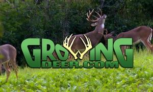 GrowingDeer