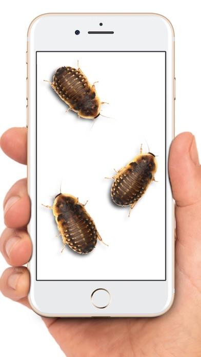 Maus auf dem Bildschirm WitzScreenshot von 8