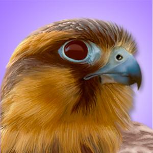 iBird Pro Guide to Birds app
