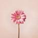 心情物语 - 唯美图片、情感语录治愈系美文