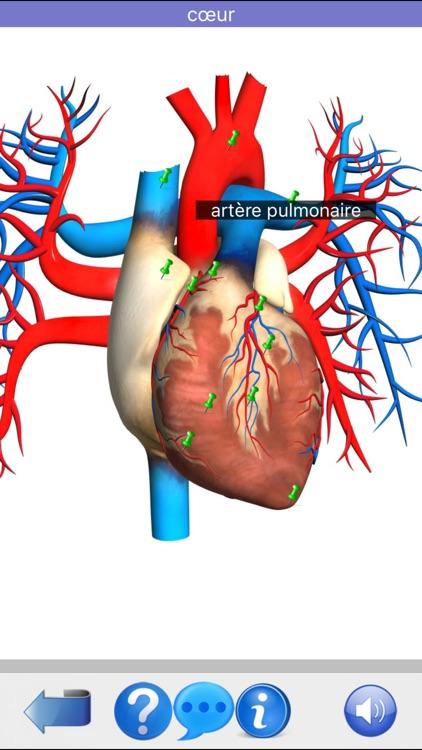 Anatomie Visuel screenshot-8