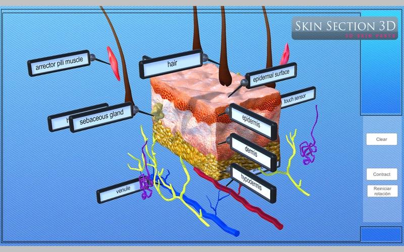 Skin Section 3D скриншот программы 4