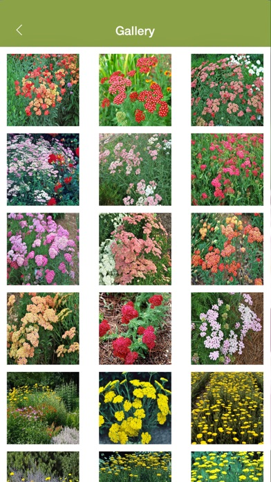 download Armitage's Great Garden Plants apps 1