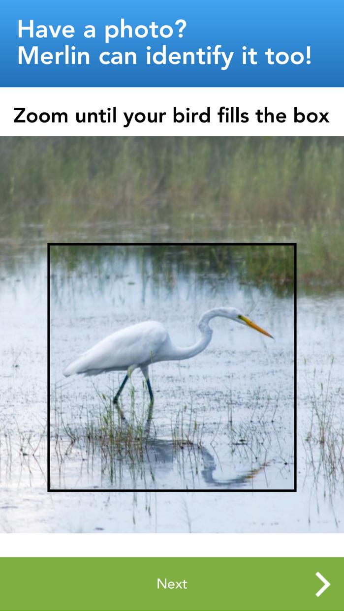 Merlin Bird ID by Cornell Lab Screenshot