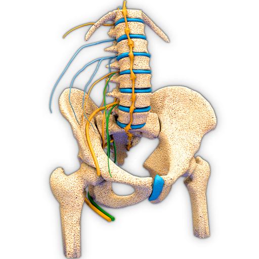 Hip Nerves Ending