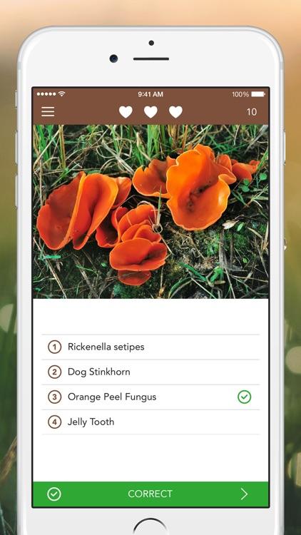 Mushrooms PRO Hunting Safely screenshot-3