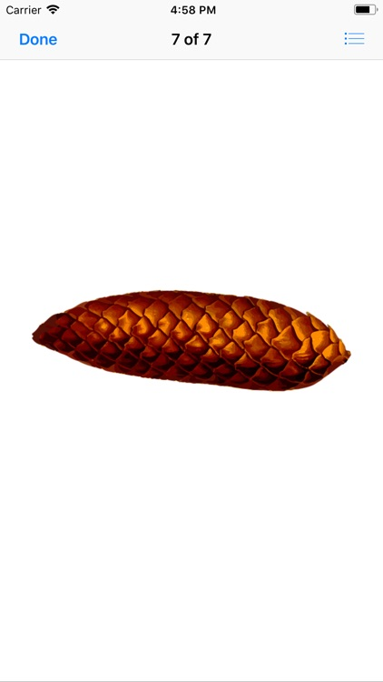 Pine Cone Stickers screenshot-7