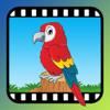 Video Touch - Vögel