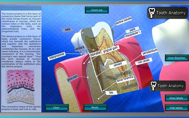 Tooth Anatomy скриншот программы 5