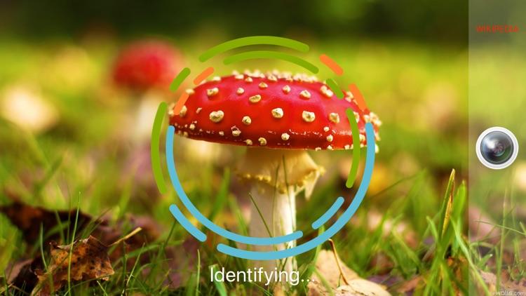 MushroomSnap - Mushroom ID Pro