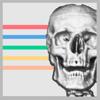 Anatomikort