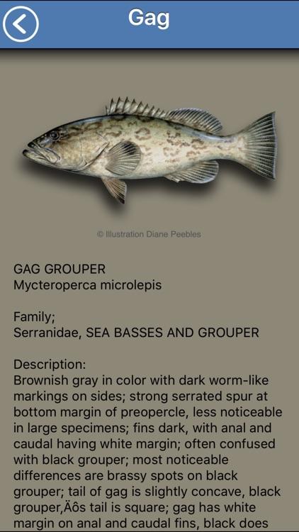 Fish the Gulf screenshot-4