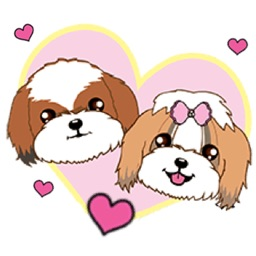 Shih Tzu Dog Couple Sticker