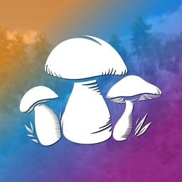 Mushroom Hunting Simulator 3D