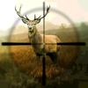 Hunting Simulator Icon