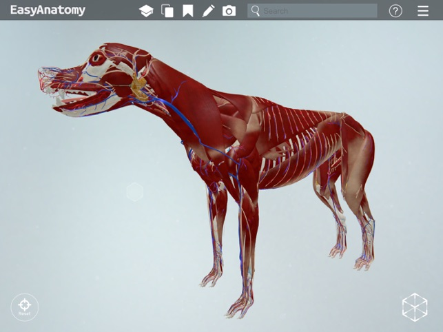 easyanatomy 3d canine anatomy on the app store