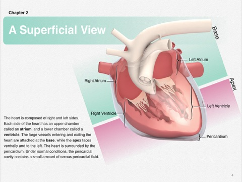 Canine Cardiac Anatomy by Educational Resources, University of ...