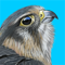 App Icon for iBird UK Pro Guide to Birds App in Brazil IOS App Store