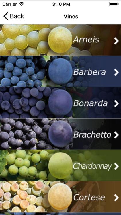 Italian Wine - Piedmont
