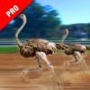 Ostrich Racing Simulator Pro