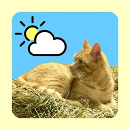 WeatherCatRCP
