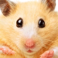 Codes for Hamster Jigsaw Puzzle Games Hack