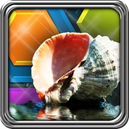 HexLogic - Seashells